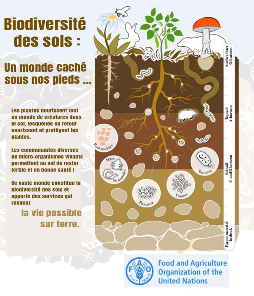 Biodiversité sols ONU